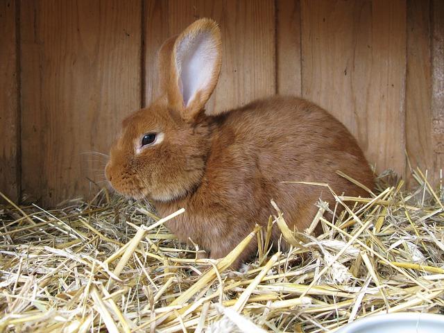 králík v králíkárně
